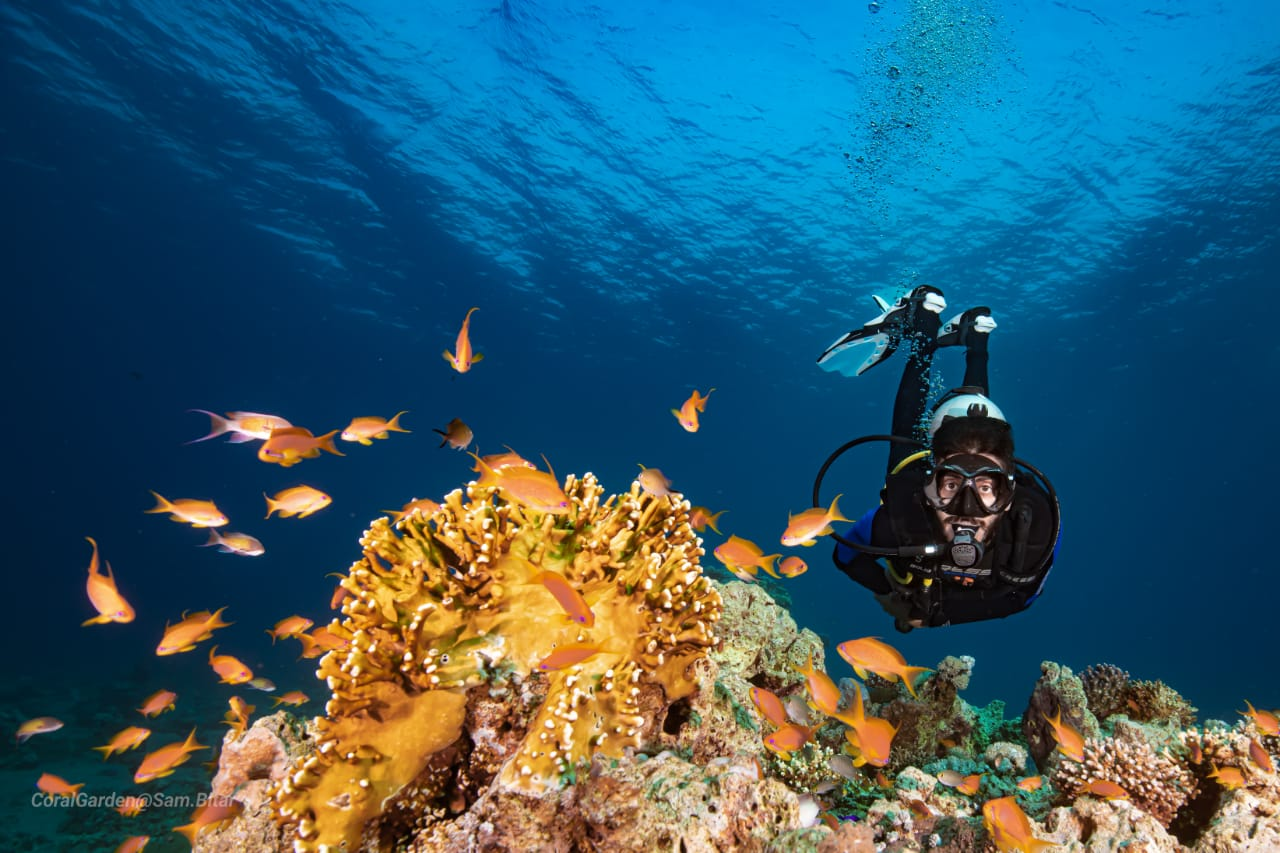 Diving in Jordan